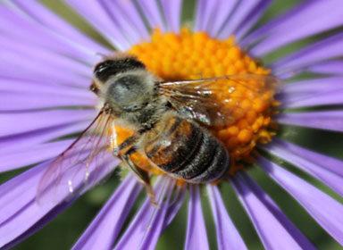 Jakubovské včelařské krmítko