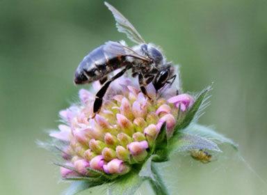 Stropní včelařské krmítko Bohuslava Smetany