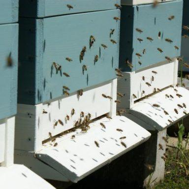 Včelín, včelí úl - Jakubovské včelařské krmítko