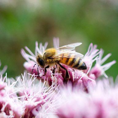 Krmení včel Jakubovským včelařským krmítkem