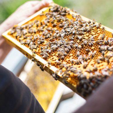 Včelařské krmítko pro včely