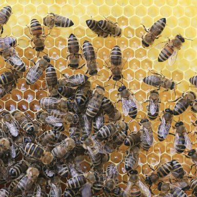 Včelařství - Jakubovské včelařské krmítko