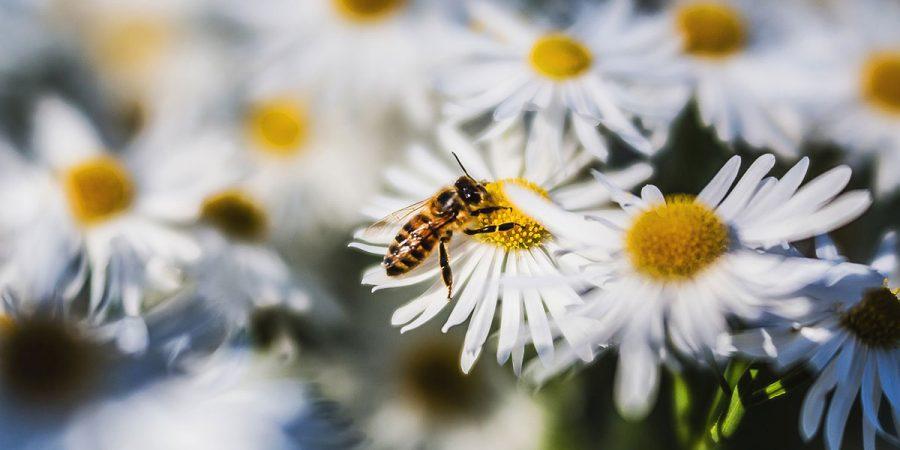 Krmení včel Jakubovským stropním krmítkem