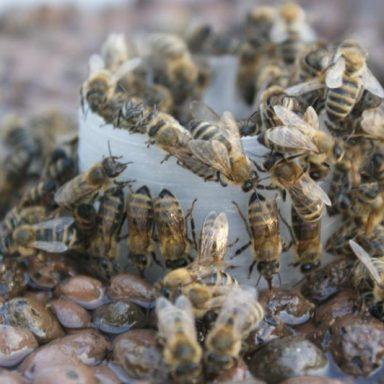 Krmení včel - Jakubovské včelařské krmítko