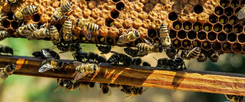 Snadné a efektivní krmení včel
